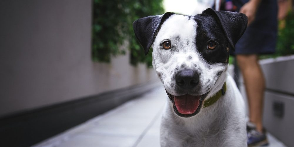 How Can CBD Oil Products for Dogs Help Manage Medical Conditions?